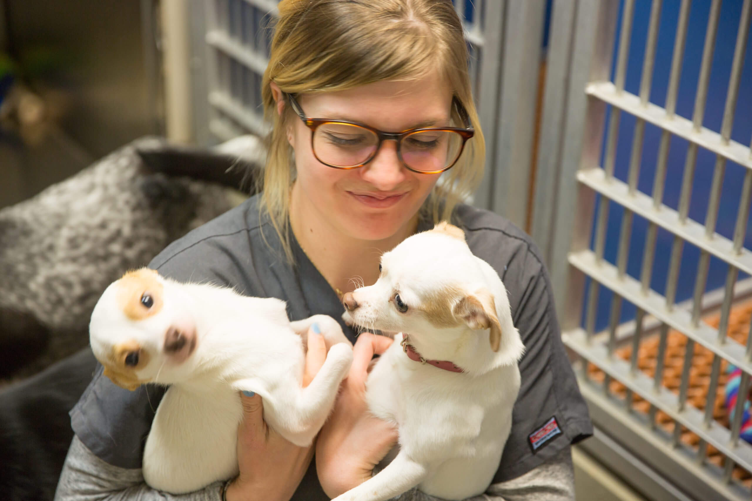 staff hold 2 small dogs