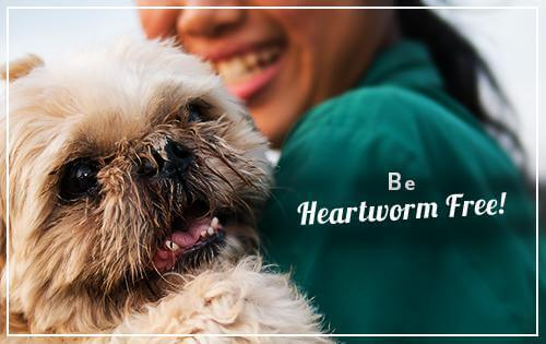 Be heartworm free!