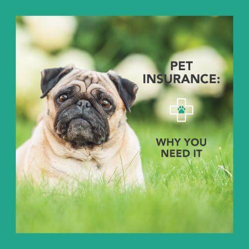 Pet insurance, why you need it
