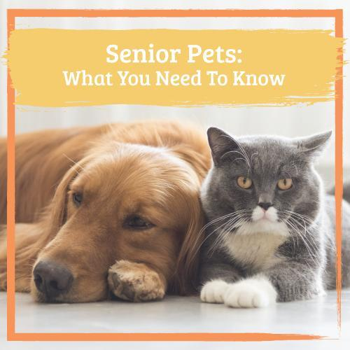 senior pets what you need to know